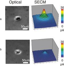 micor nanoelectrode